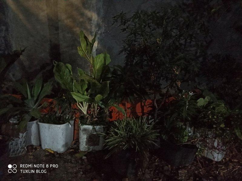 Hasil Foto Kamera Xiaomi Redmi Note 8 Pro