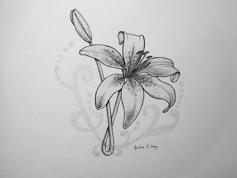 05-Tiger-Lily-Marlena-Jones-www-designstack-co