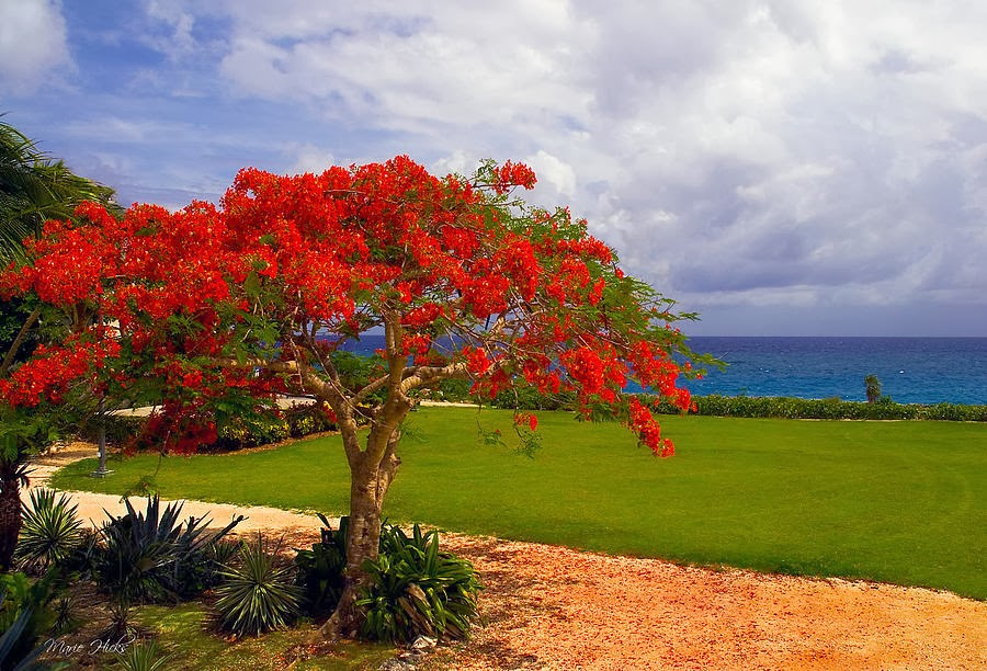 Wallpaper Beauty Of Nature Quot Antigua Amp Barbuda Jumby Bay
