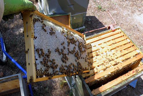 Μελισσοκομικές συμβουλές Ιουλίου