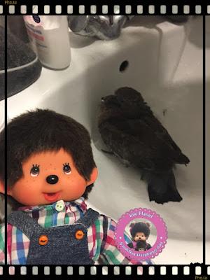 Bubbles le Monchhichi et Colombine le bébé pigeon