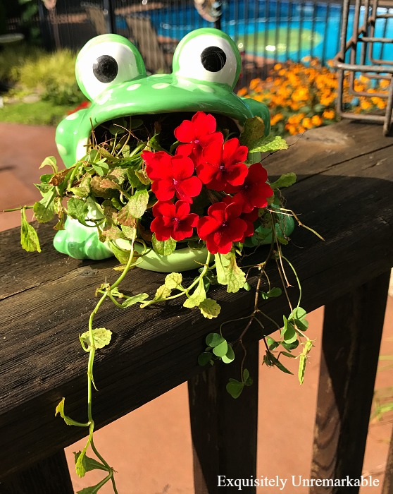 Frog Scouring Pad Planter
