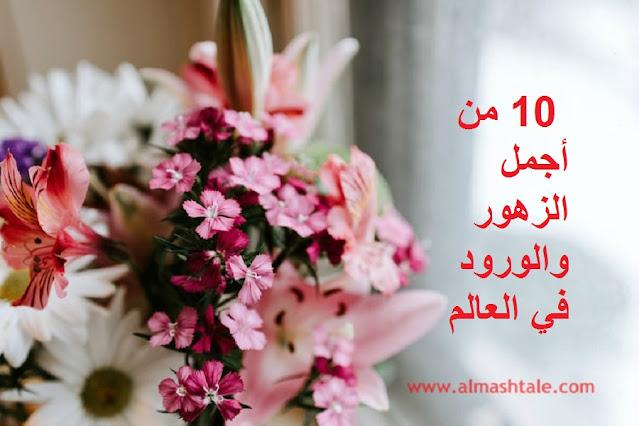 جديد باقة من أجمل 10 زهور وورود في العالم