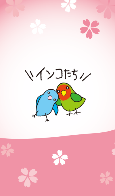 Cute parakeets 2