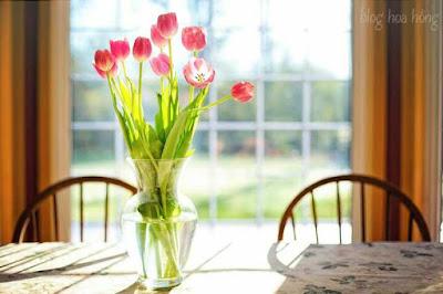 hoa tươi lâu nhiều ngày