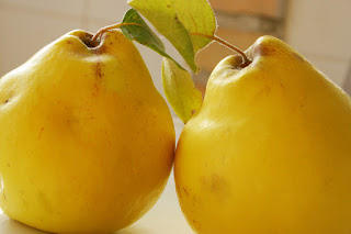Quince look like a cross between a pear and apple