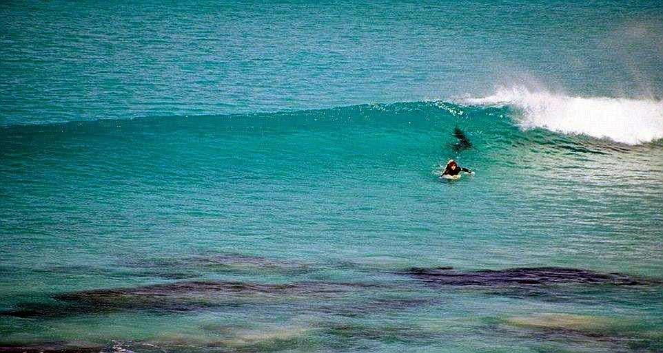surfistas perseguido por tiburon 05