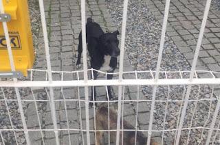 Cão que espera pelo dono em hospital é resgatado pela Guarda Municipal em Balneário Camboriú (SC)