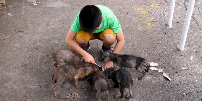 Young Boy Finds 6 Big 'Rats' Behind A Church. One Year Later They Look Completely Different