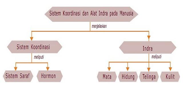 Peta Konsep Sistem Koordinasi dan Alat Indra Pada Manusia