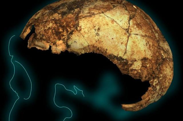 Ανακαλύφθηκε το αρχαιότερο στον κόσμο κρανίο του Homo erectus