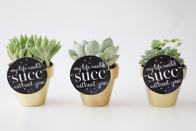 valentine's day diy plants succulents