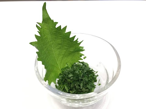 SHISO - green basil : eating with style