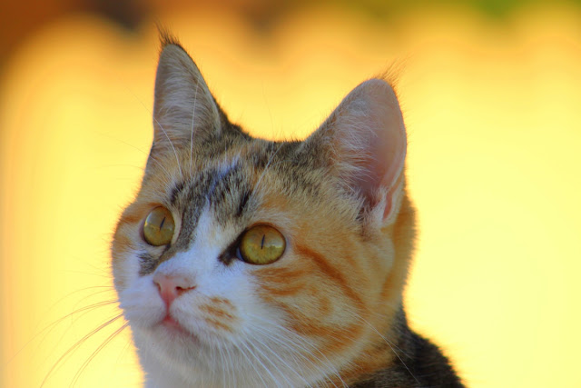 The reason why your Cat Can Improve Your quality of life