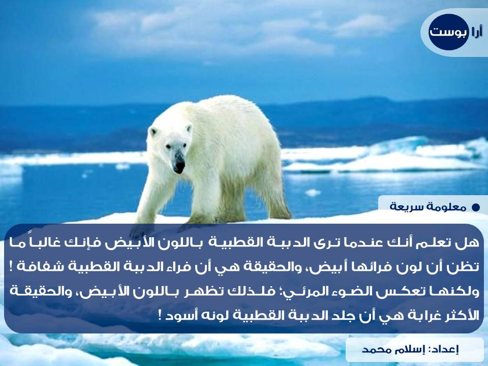 لماذا تبدو الدببة القطبية بيضاء اللون ؟