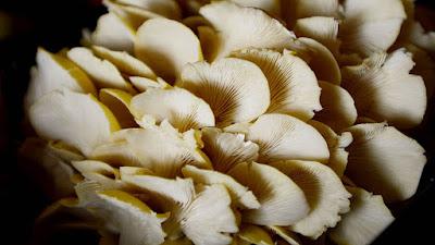 Mushroom training center in Hyderabad