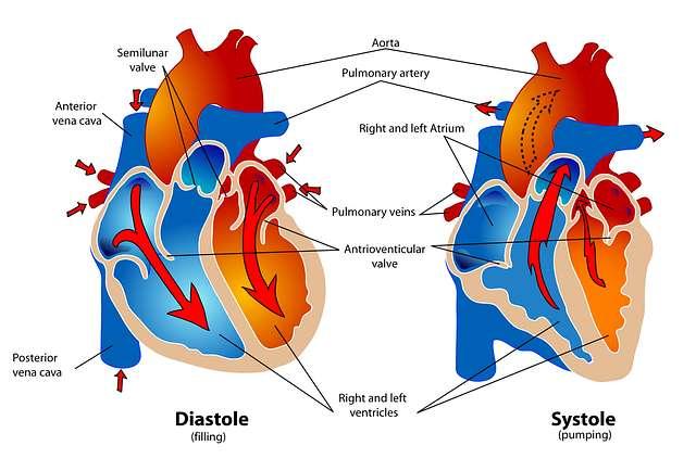 Kelainan-kelainan Sistem Peredaran Darah dan Jantung, Penyebab, Gejala dan Cara Penanganannya