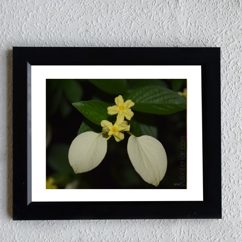 Flowers-still life-framed-print-wall-frame-port harcourt-Nigeria