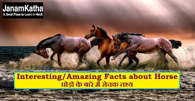 घोड़ो के बारे में रोचक तथ्य Interesting/Amazing Facts about Horse in hindi