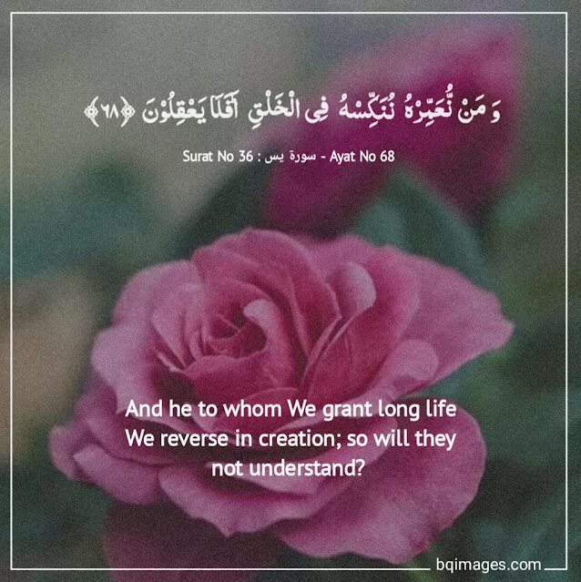 quran verses in arabic with english translation