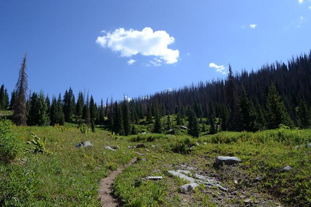 trail through meadow