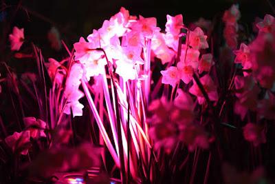 LED Pflanzenlampen Shop Mittsommer Aktion