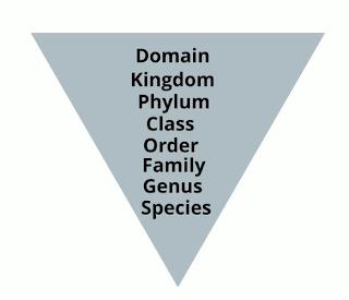 levels classification