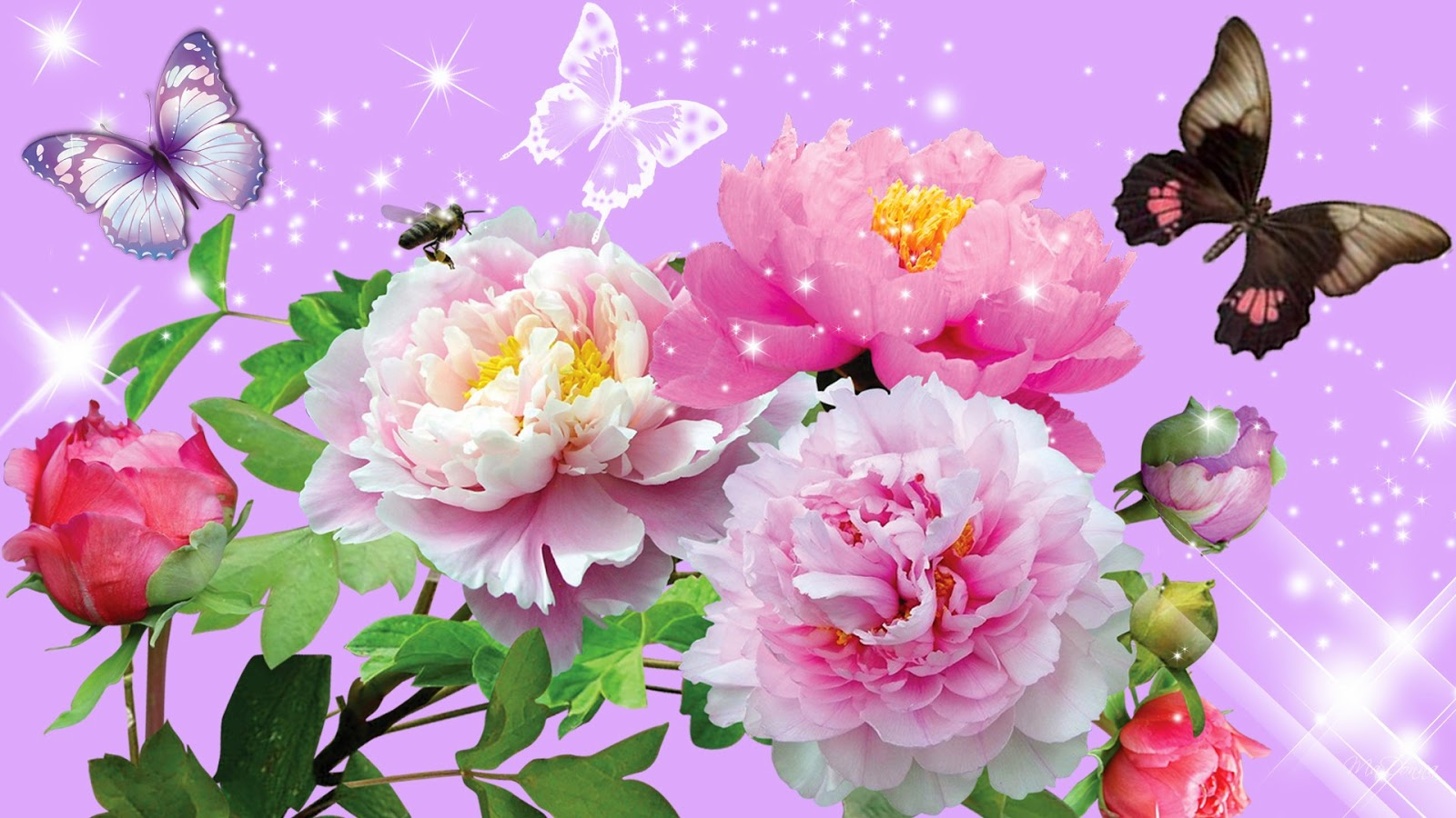 Beautiful Images Of Nature And Flowers
