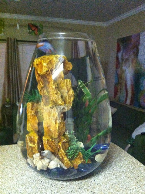 Cool glass fish bowl decorations ideas and tips for Unique betta fish tanks