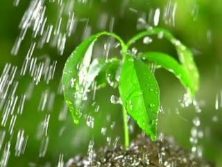 Doa Saat Hujan. Lengkap Arab Dan Artinya