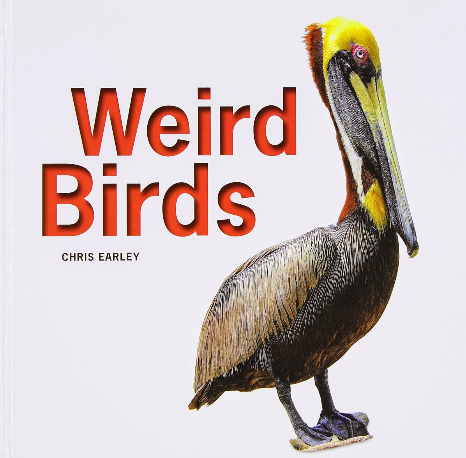 Childrens book list about birds with reviews