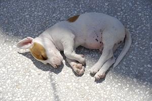 Vermi - il Cane - Come curare i vermi nei cani