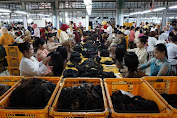 Rambut Palsu Indonesia Terbukti Jempolan