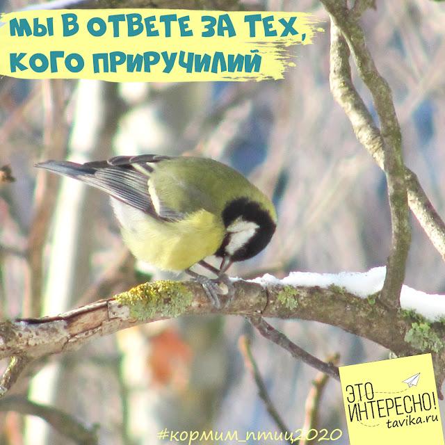 график кормления птиц