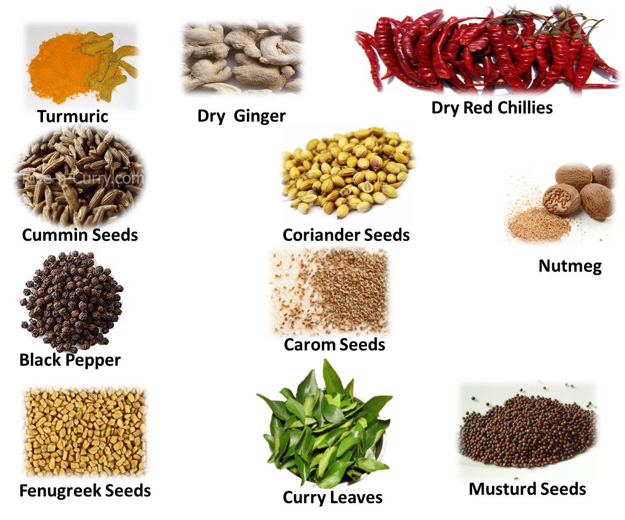 Indian Food Spices And Herbs