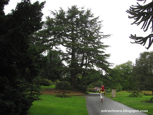 Ботанический сад в Эдинбурге