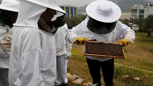 """Εκτιμήσεις ότι 30.000 μελίσσια χάθηκαν από την κακοκαιρία """"Ιανός"""" -  Σε απόγνωση οι μελισσοκόμοι"""