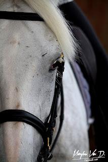Prendre son temps à cheval, l'impatience est l'ennemi de l'équitation.