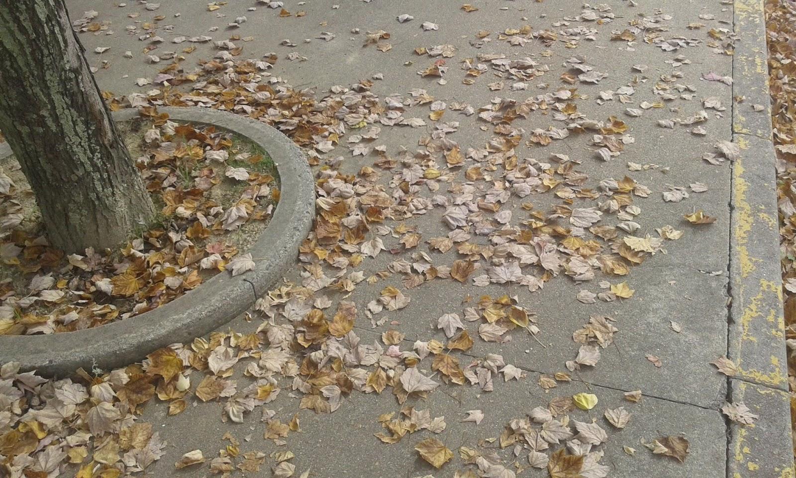 ☂ tag: tudo sobre o outono.