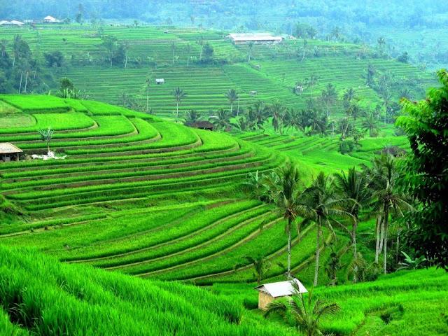 Terasering Jatiluwih adalah Tempat Romantis di Bali
