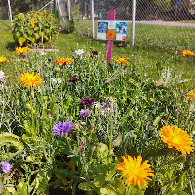 Paljon värikkäitä kukkia