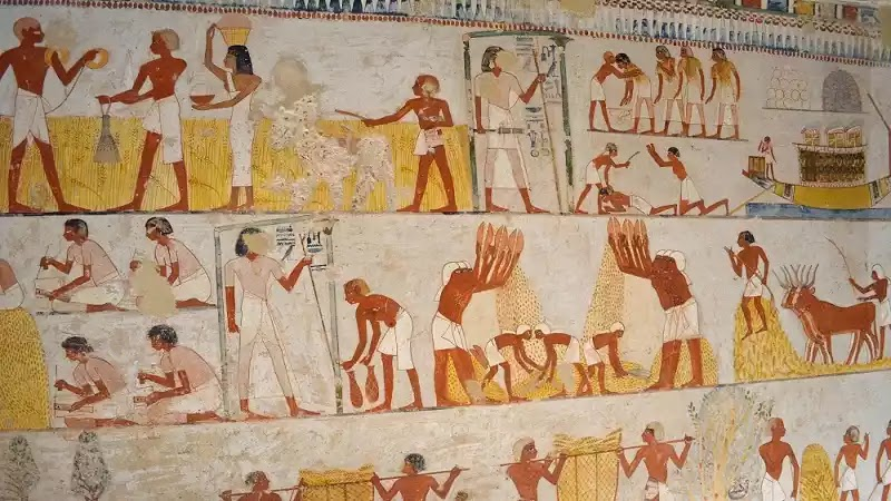 Ancient Egypt Agriculture