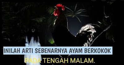 Arti Ayam Berkokok Malam Hari, Lihat Hantu, Malaikat, Hingga Kehamilan