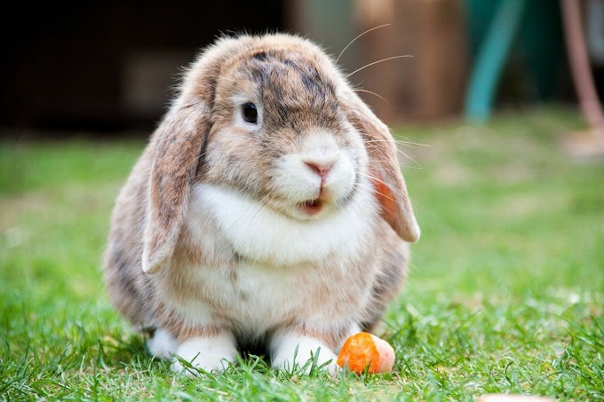 5 Signs Your Rabbit is Dying