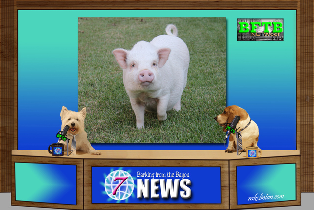 BFTB NETWoof News set with dogs