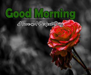 New Good Morning 4k Full HD Images Download For Daily%2B26