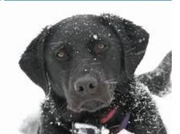 Здоров'я тварин і безпека у холодні, зимові місяці
