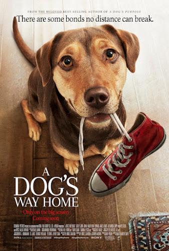 A Dog's Way Home (BRRip 720p Dual Latino / Ingles) (2018)