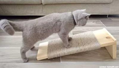 Garukan kucing