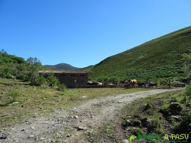 Ruta al Tres Concejos y Estorbin: Granja y ganado